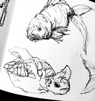 illustration-croquis-poissons
