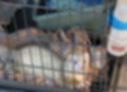 Animalerie-Furet