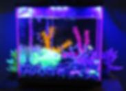 Animalerie-GloFish