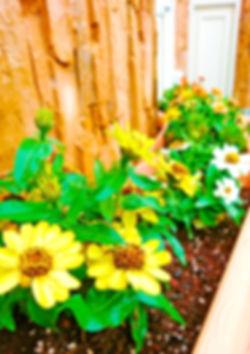ガトウミヤの花壇