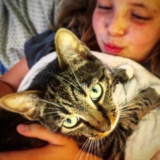 Austin the Cat