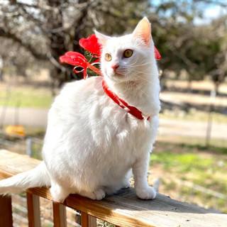 Bonnie the Cat