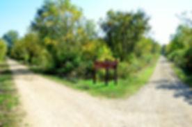 badger trail 3.JPG