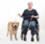 Senior woman in wheelchair with guide do