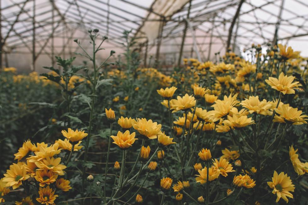 Récolte de fleurs