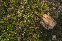 20150527_lakewoods nature_005