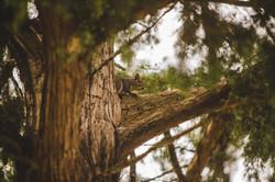 20150528_lakewoods nature_028