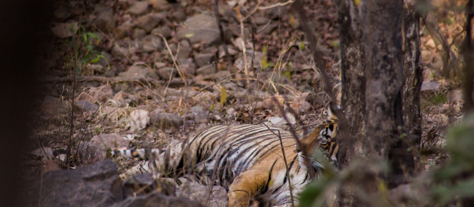 Message d'un Tigre dans une Réserve Indienne