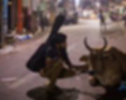 Animal communicator-5.jpg