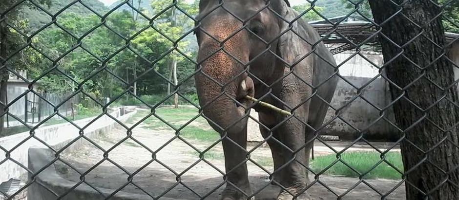 Libérez Kaavan, l'éléphant du Zoo d'Islamabad.
