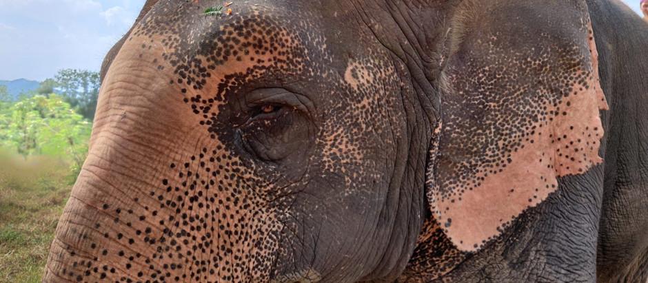 Nouvelle Ère : Message des Eléphants