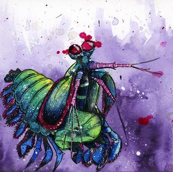 shrimp001.jpg