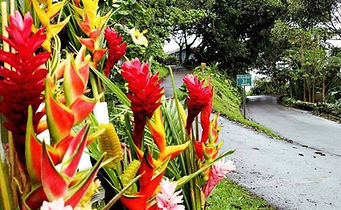 Tropical-Bouquet-along-Road-to-Hana-e138