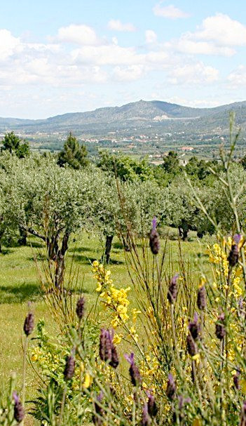 olijfgaard.jpg
