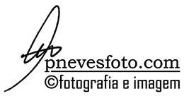 pnevesfoto