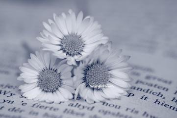 Bloemen stilleven zwart wit
