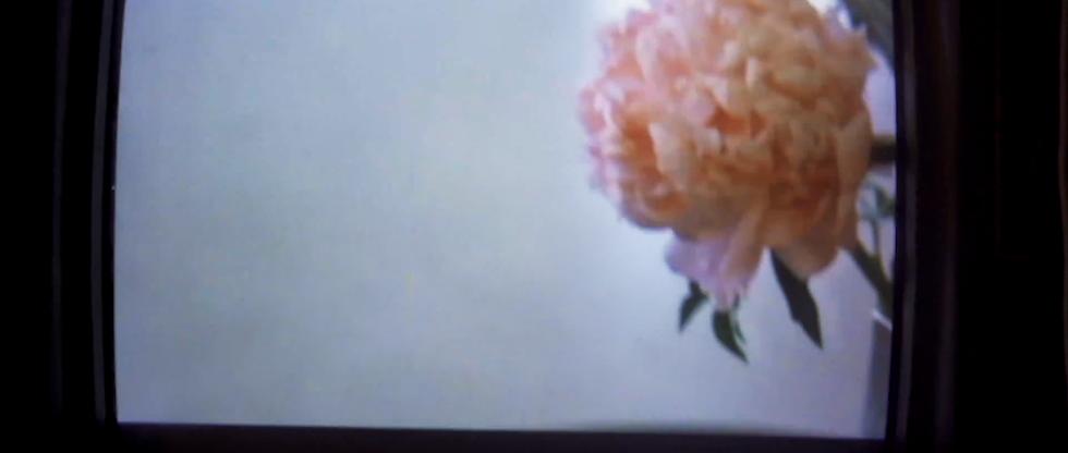 Screen Shot 2020-12-19 at 12.36.56 PM.pn