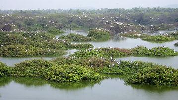 vedanthangal-lake-1595746894.jpg