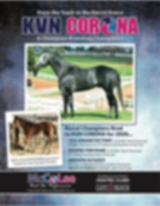 KVN Corona