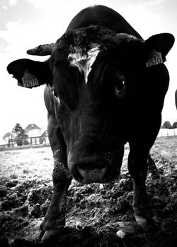 locatiefotografie-rotterdam-fotograaf-pim-vuik-nederland-05.jpg