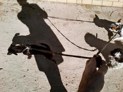 oliver-haupt-dog-walk-e-web_med.jpeg