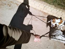 oliver-haupt-dog-walk-b-web_med-1.jpeg