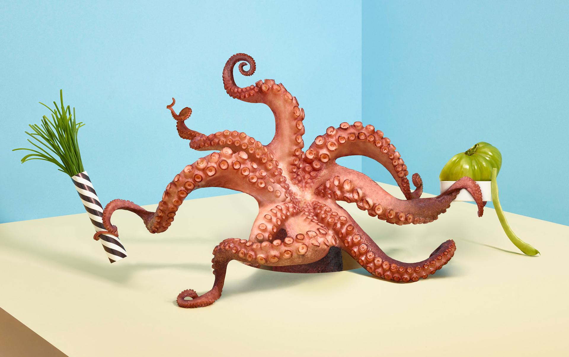 Fricote-Octopus-Web
