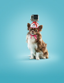 Zimmo-Hond.jpg