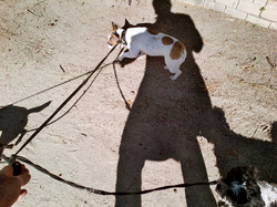 oliver-haupt-dog-walk-a-web_med.jpg