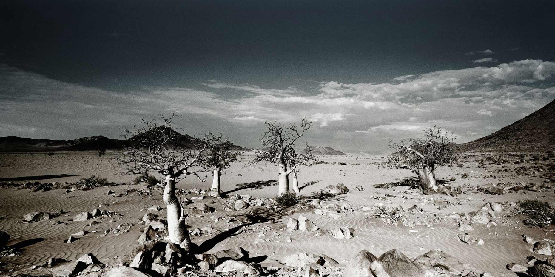 fotografie-rotterdam-fotograaf-pim-vuik-namibia18-L.jpg