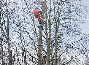 Tree-lopping - © Mark Rosebury
