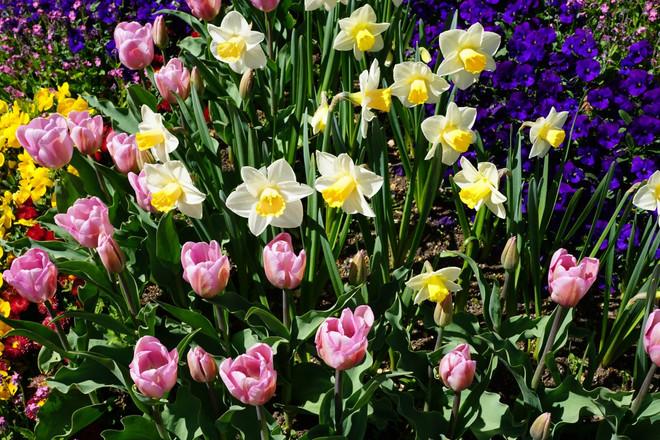 Kutsu kevätkokoukseen