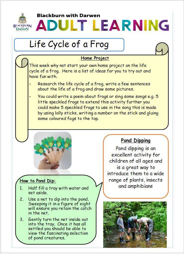 frog life 1.jpg