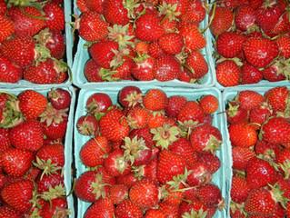 Strawberry Season is Here!