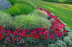 garden-3362798