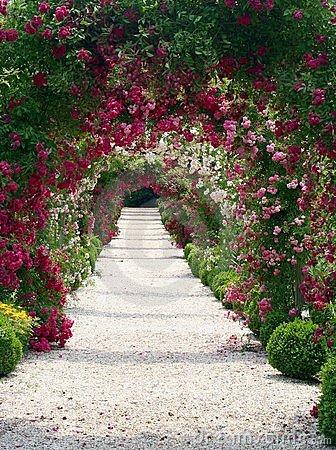 rose-garden-landscape-965709