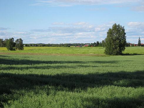 800px-Liminka_field_20080726_01.jpg