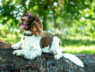 Max - Paws in Action is a Professional Dog Photographer
