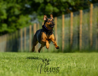 Indi - Paws in Action is a Professional Dog Photographer