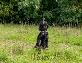 Obi - Paws in Action is a Professional Dog Photographer
