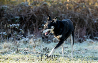 Tik Tik - Paws in Action is a Professional Dog Photographer