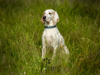 Blue - Paws in Action is a Professional Dog Photographer
