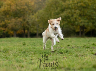 Molly - Paws in Action is a Professional Dog Photographer