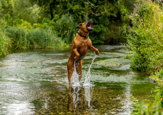Ronnie - Paws in Action is a Professional Dog Photographer