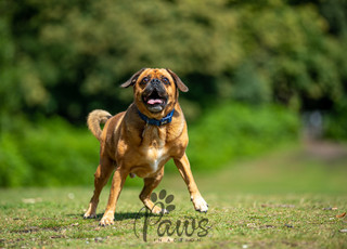 Alfie - Paws in Action is a Professional Dog Photographer