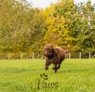 Dudley - Paws in Action is a Professional Dog Photographer