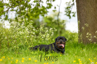 Joey - Paws in Action is a Professional Dog Photographer