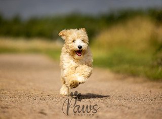 Skye - Paws in Action is a Professional Dog Photographer