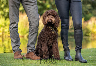 Isla - Paws in Action is a Professional Dog Photographer