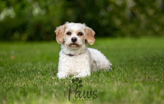 Tusk - Paws in Action is a Professional Dog Photographer